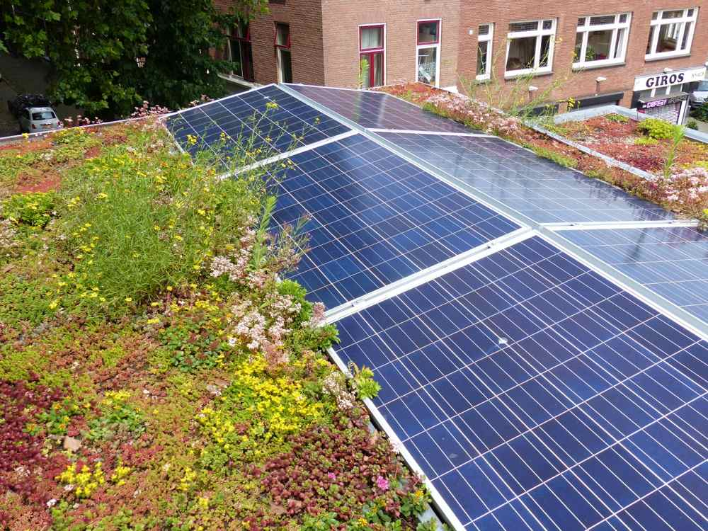 photo green roof and solar panels 7 July 2016